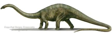 Diplodocus carnegi