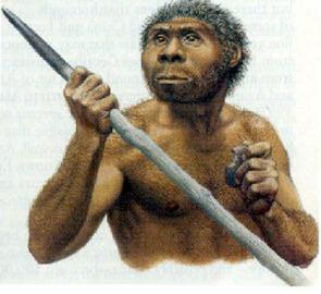 Homo erectus 4