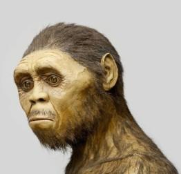Homo erectus 5
