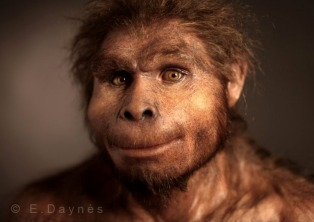 Homo floresiensis 2