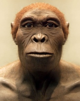 Homo habilis 2