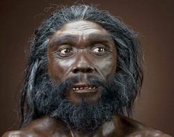 Homo heidelbergensis 1