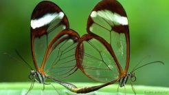 Animal marinho transparente 7